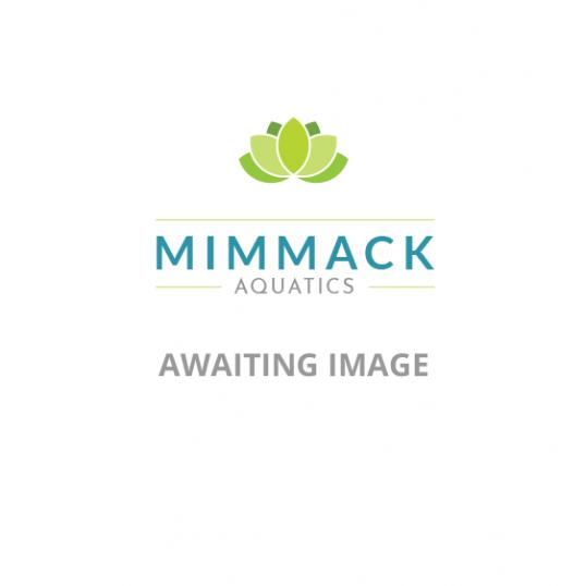 Sagittaria Sagittifolia-Native Arrowhead