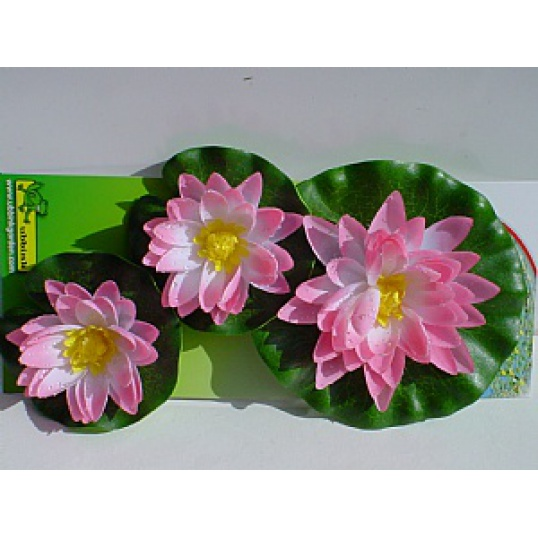 Water Lily Flowers Pink