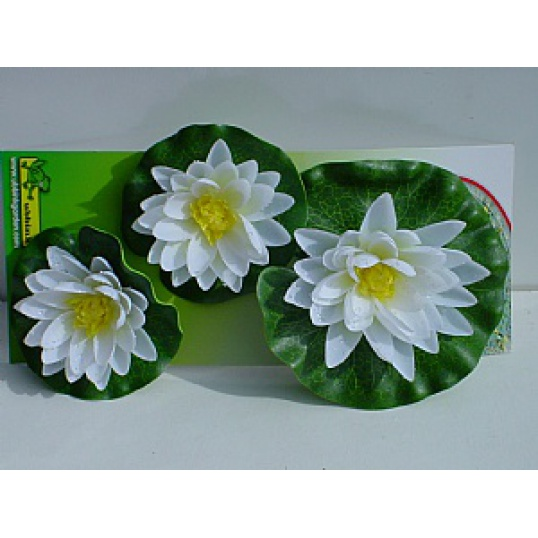 Water Lily Flowers  White