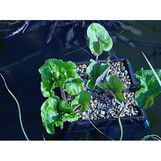 Aquatic Floating Plant Basket 35cm Square
