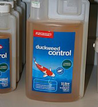 Duckweed Control