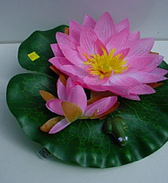 Water Lily With Frog Pink