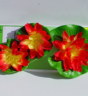 Water Lily Flowers Red