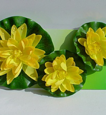 Water Lily Flowers Yellow