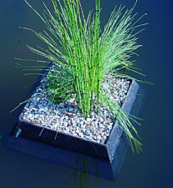 Aquatic Floating Plant Basket 25cm Square