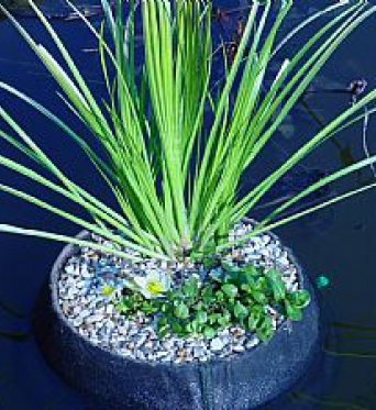 Aquatic Floating Plant Basket 35cm Round
