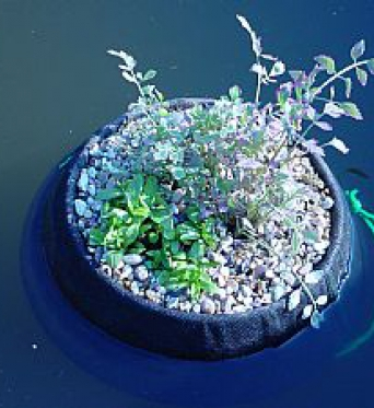Aquatic Floating Plant Basket 30cm Round