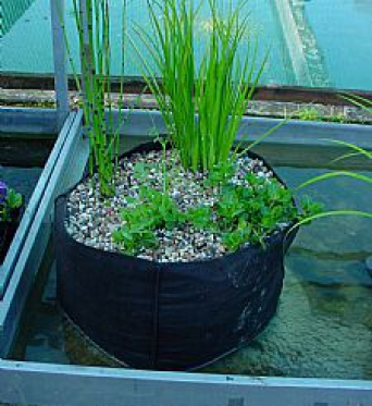 Pond Planting Bag Round 25cm